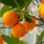 新商品!紅茶花伝クラフティーのオレンジティーは美容&健康に効果的