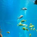 保護されたアザラシ 水族館で生きて行く